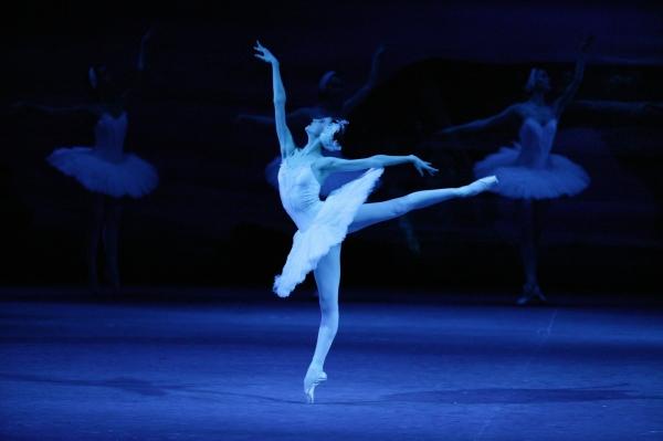 Swan_lake_cdamir_yusupov